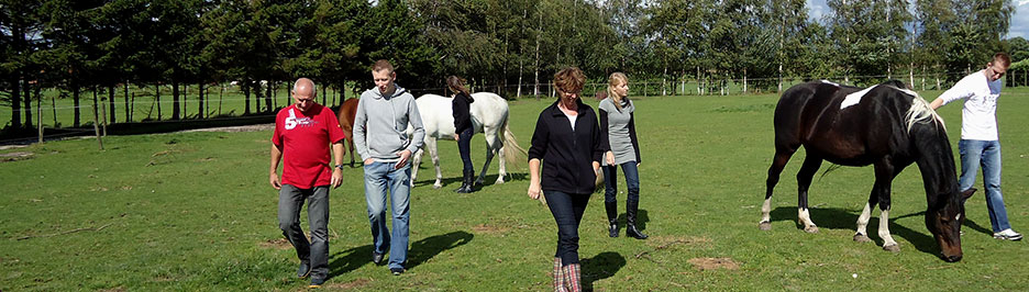 Workshops - Cavallo Coaching - Begeleiding en coaching met paarden