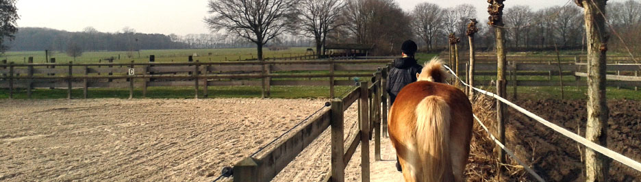 Contact - Cavallo Coaching - Begeleiding en coaching met paarden